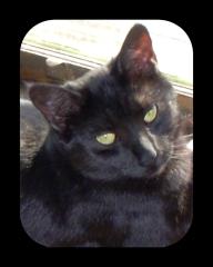 MIMI CAT